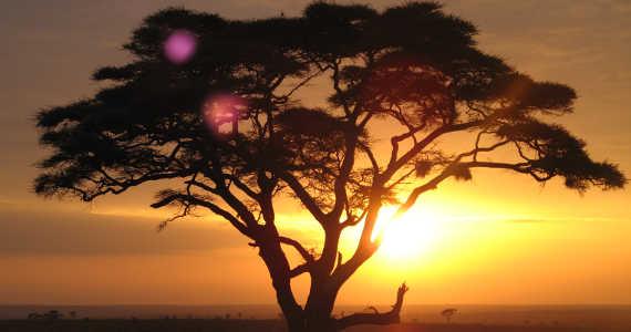 Serengeti - Safari - Afrika